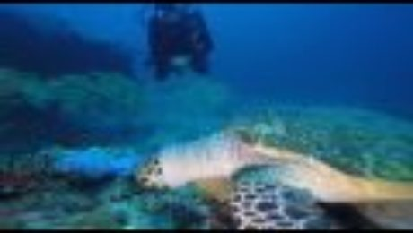 Hampton Roadslearn To Divelynnhaven Dive Centermaldivesscuba Diveturtlevirginia Beach